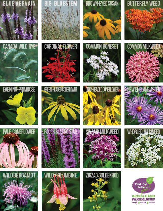 Not So Hollow Farm - Perennials for Pollinators Native Plants of