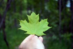 Maple Leaf Holding