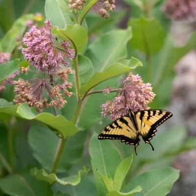 PLANTS IN ACTION : JUNE